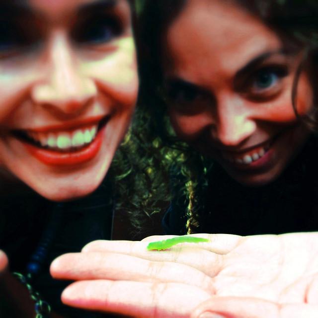 Marilyn Dennis caterpillar