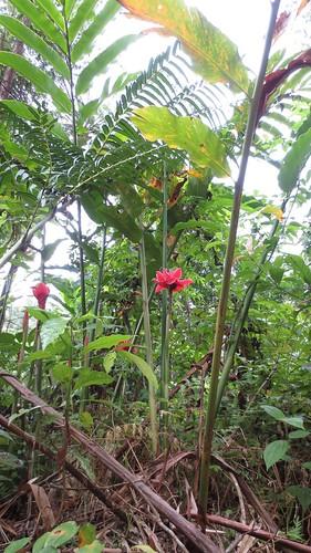 Koh Samui Mountain サムイ島の山にて
