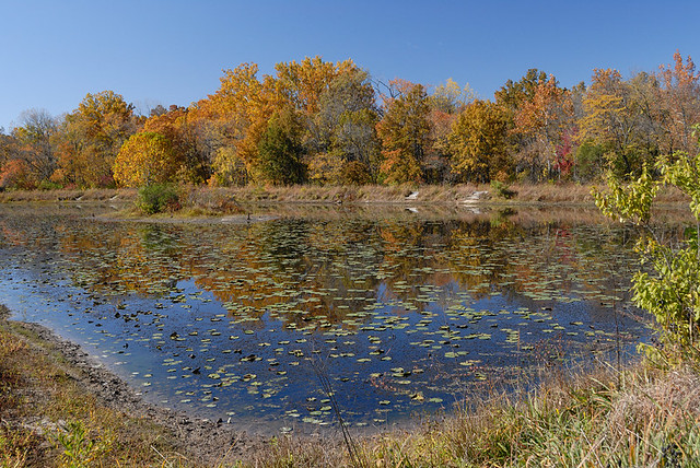 Shaw Nature Reserve (the Arboretum), in Gray Summit, Missouri, USA - lake 2