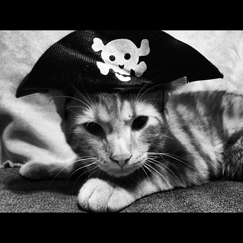 What arrrrr you lookin' at? #pirate #kitty