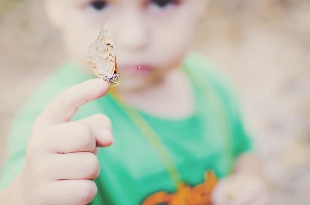 08-butterfly1