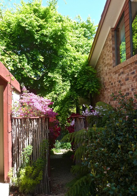 Side gate and azaleas