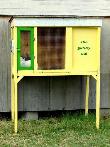Bunny Hut