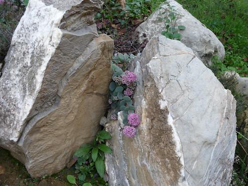 giardino roccioso  Forum di Giardinaggio.it
