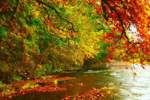 autumn trees kilkenny ireland fall nature river landscape herbst otoño otono autunna thegalaxy automnne edwarddullardphotographykilkennycityireland flickrstruereflectionlevel1 me2youphotographylevel1