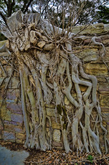 root, branch, leaf, wood, tree, flora, trunk,