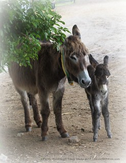 Momma Donkey And Foal at the Donkey SAnctuary in Ireland
