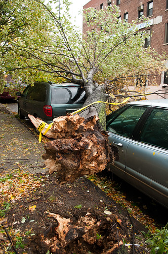 Tree Uprooted and On a Car