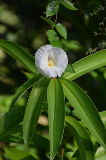 Flower (DSC_4095)