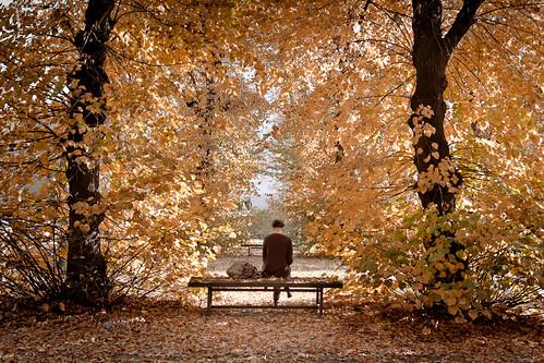 [フリー画像素材] 人物, 人物 - 後ろ姿, 人物 - 森林, 紅葉・黄葉 ID:201211051200