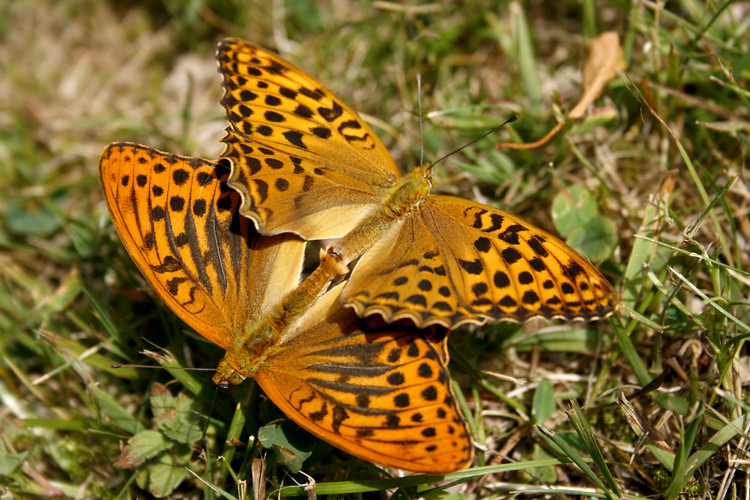 Порно butterfly