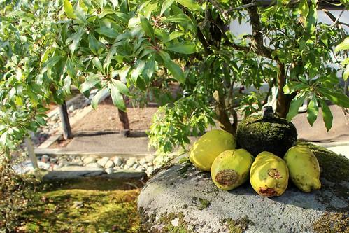 Nikko Toshogu garden2