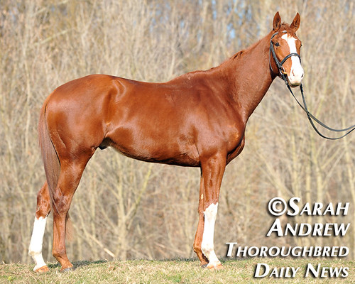Retired Racehorse Training Project's 100 Day Thoroughbred Challenge: Alluring Punch