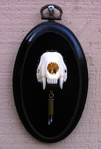 Skunk Skull Wall Mount with Quartz Shard Bullet 1 Front