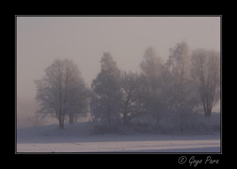 Arboleda en la niebla