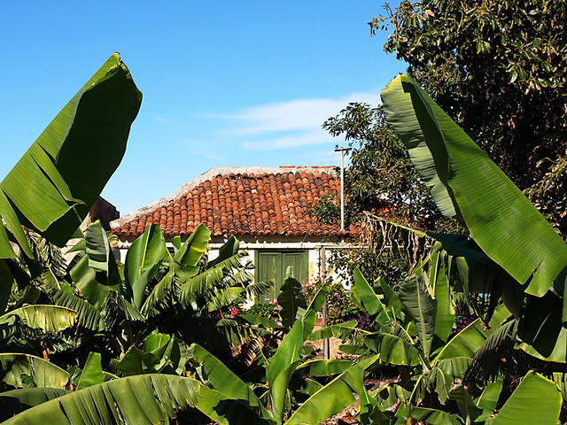 Old House in the Bananas, Tenerife