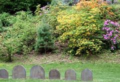 Mount Auburn Cemetery, May 2016