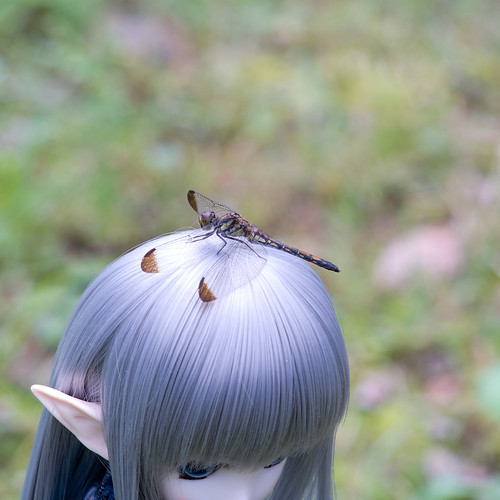 Dragonfly on head