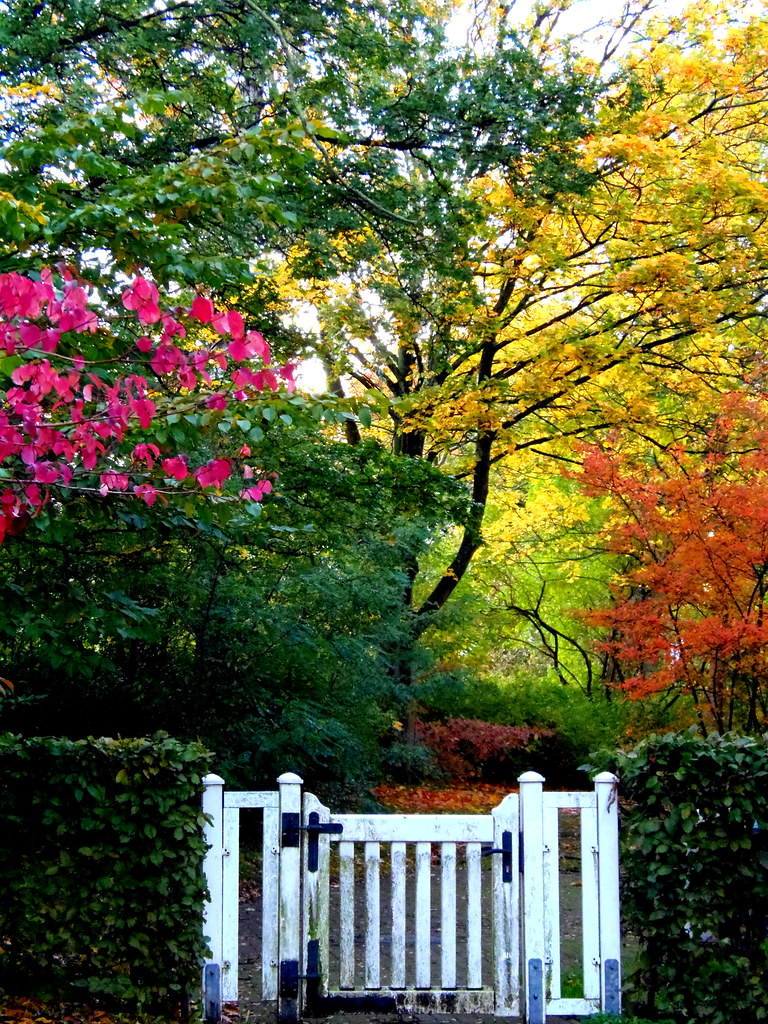 Autumn colours  / Happy Friday Fence
