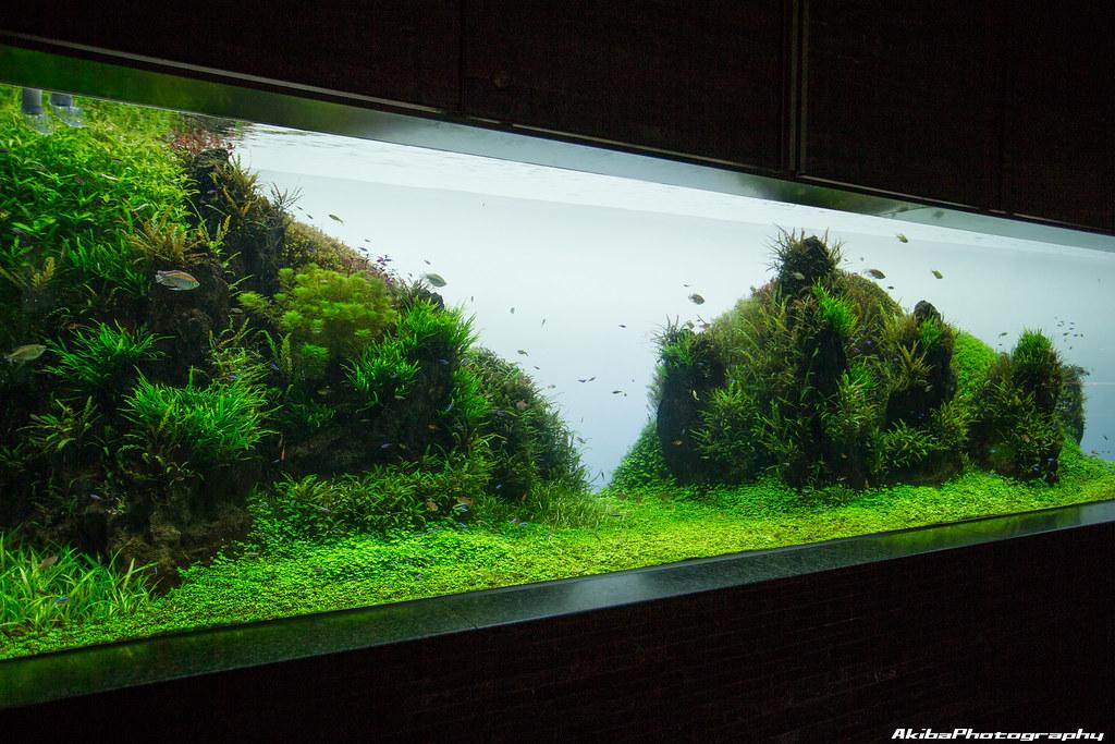 sumida-aquarium#8