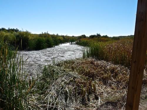 Mesilla Valley Bosque pond in October