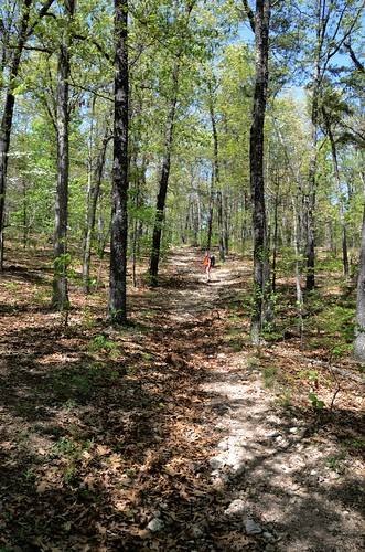 outdoors hiking missouri ozarks barrycounty pineycreekwilderness