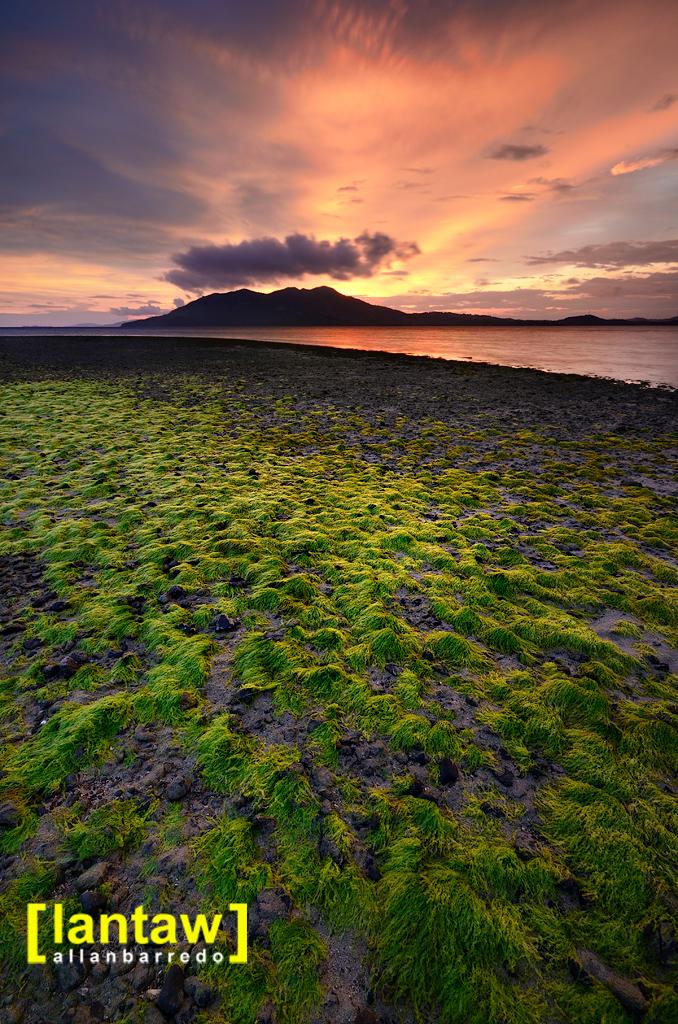 Bulubadiangan Seaweeds Lowtide Sunset