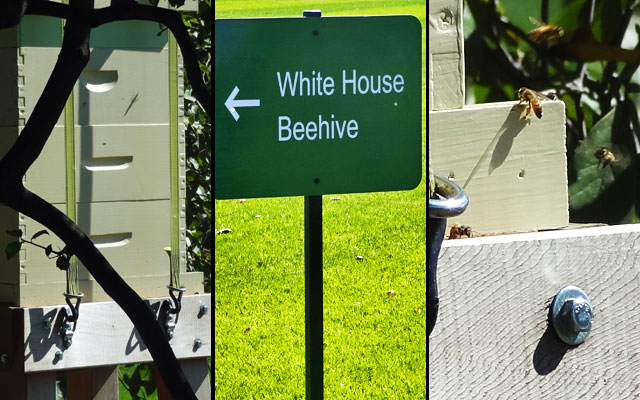 white-house-beehive