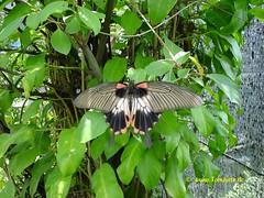 Butterfly Farm, Chiang Mai, Thailand - 2991