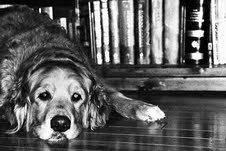 Bonham + Books