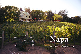 Napa: A Photoshop Curve by Tracy Zhang
