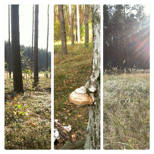 Day 21: calm: a morning walk through the woods #fmsphotoaday #fmsphotoadayoctober #FMSphotoaday #wood #morning #sun #instamood #instadaily #instagood #calm #silent #silence