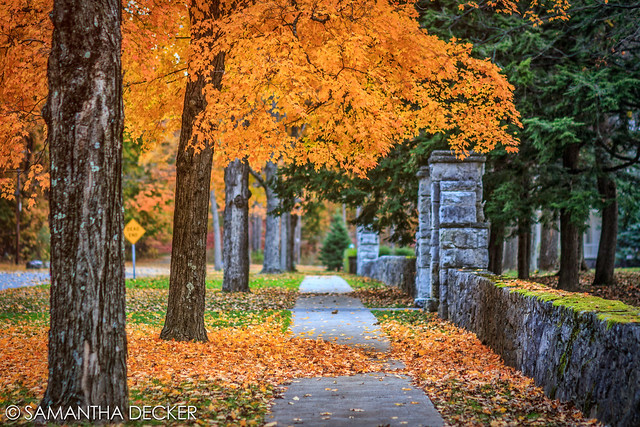 A Fall Stroll in Saratoga
