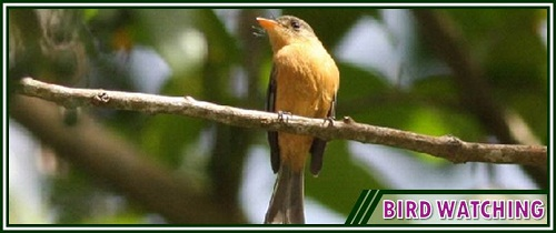 St. Lucia Bird Watching