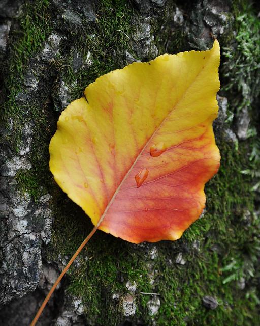 Image Result For Bright Leaf