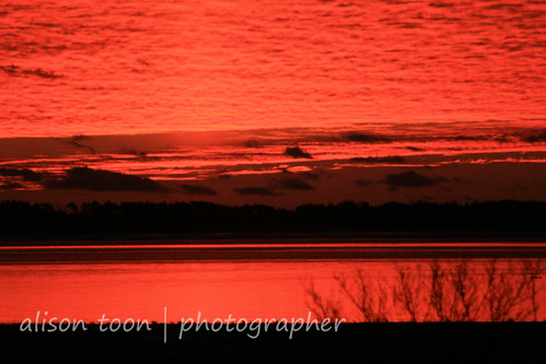 winter newyork sunrise dawn longisland greatsouthbay masticbeach wetands threeandahalfyears williamfloydestate alisontooncom