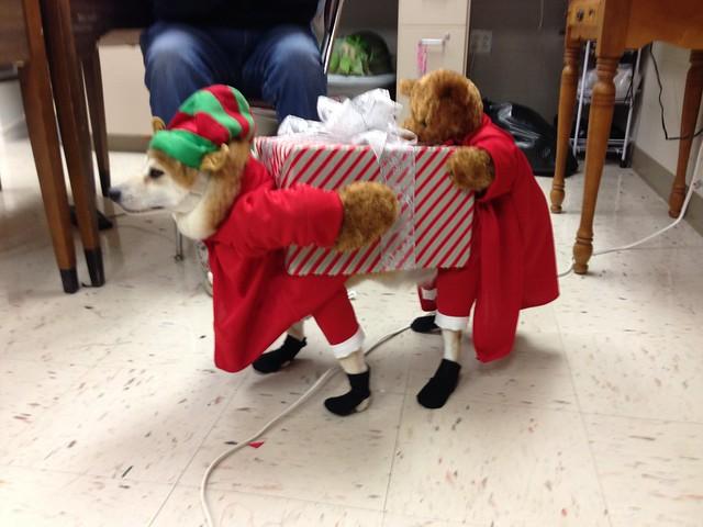 Dog Pirate Costume Uk