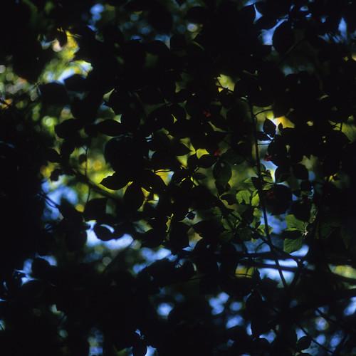 20121015002hakkoda.jpg