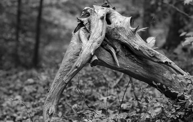 Tree-corpse
