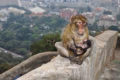 Monkeys on the Mount