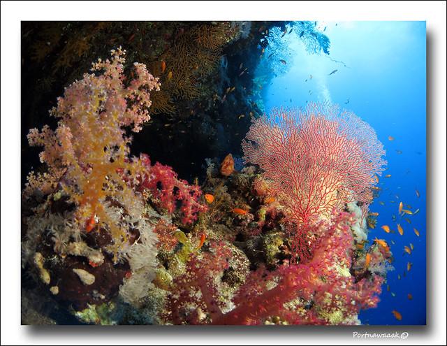de retour de mer rouge - EGYPTE 8142642359_ebc6b78996_z