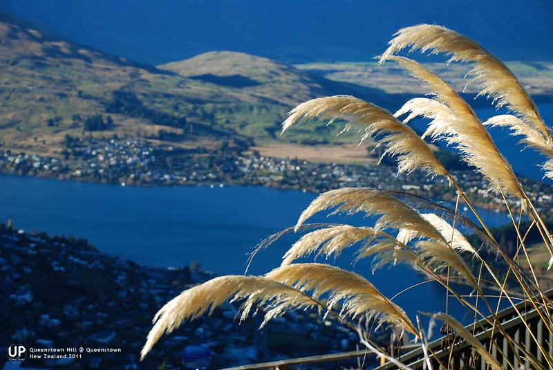 Queenstown-Hill