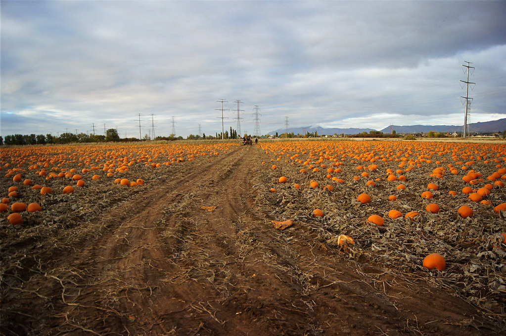 2012pumpkinpatch11