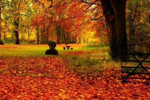 autumn trees kilkenny ireland fall nature leaves landscape herbst eire otoño emeraldisle autunna bestcapturesaoi automnne blinkagain flickrstruereflectionlevel1 flickrsfinestimages1 me2youphotographylevel1