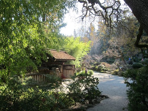 Hakone Japanese Gardens, Saratoga, CA IMG_2305
