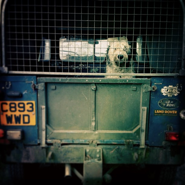 Farm Dog in Landrover #iphone #iphoneography #hipstamatic #newforest #dog #landrover