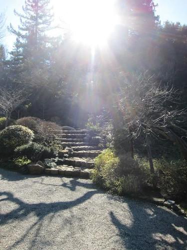 Hakone Japanese Gardens, Saratoga, CA, sunrays IMG_2295