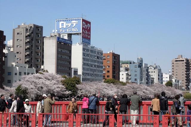 吾妻橋にて(At the Azuma bridge.)