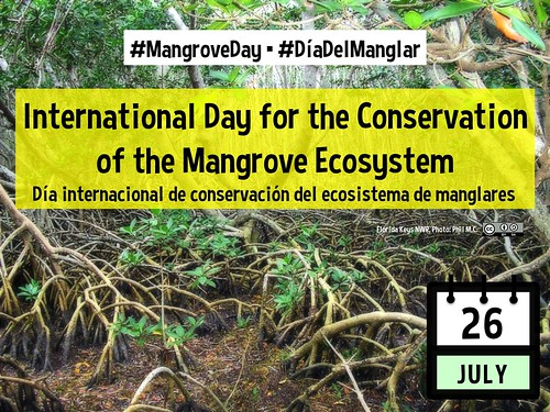 July 26 International Day for the Conservation of the Mangrove Ecosystem (Día internacional de conservación del ecosistema de manglares) #‎DíaDelManglar #MangroveDay @UNESCO