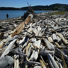 A sea of #driftwood! #beach #fort #waterfront #oakharbor #whidbeyisland #PNW